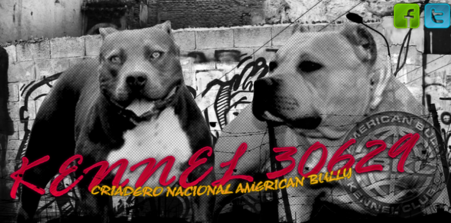 Pin American Bully Pit Bull Pup Up For Sale Or Trade U K C Reg Paper ...